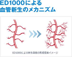 ED1000による血管新生のメカニズム