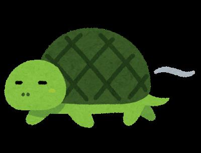 亀頭をイメージした亀